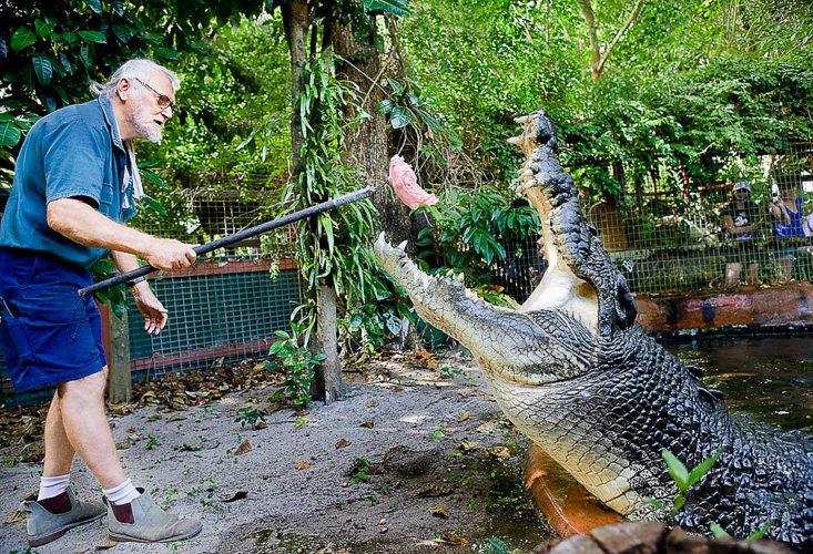 World largest crocodile ever recorded