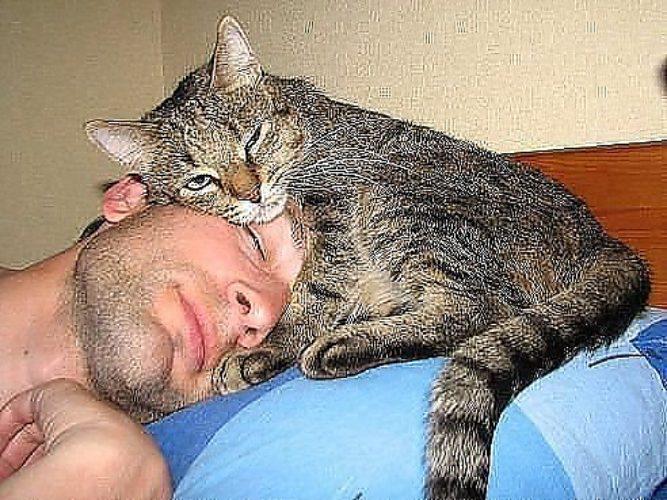Почему кошка постоянно лезет на руки