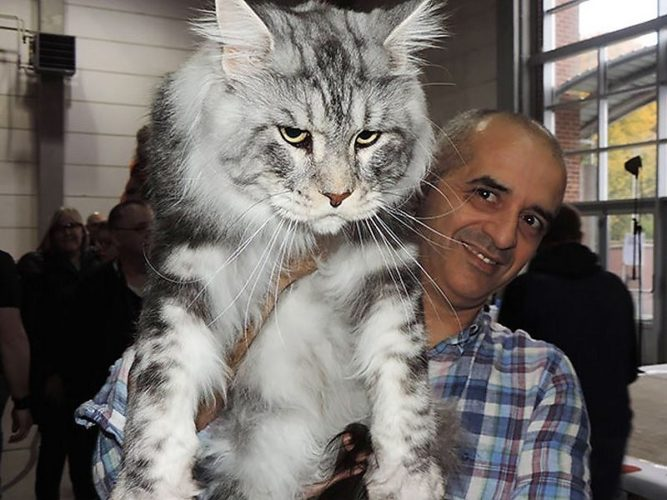 Самые большие кошка
