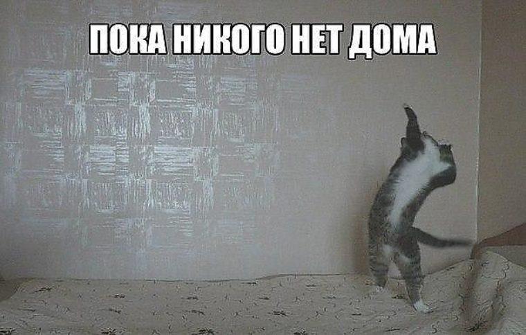 zyat-poka-zheni-netu-doma