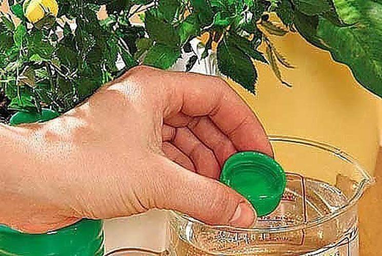Опрыскивание нашатырным спиртом клубника